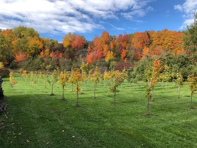 Terre à vendre à Sainte-Anne-de-Beaupré, Capitale-Nationale, Avenue  Royale, 21221701 - Centris.ca