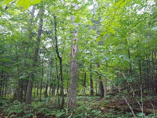 Lot for sale in Wentworth-Nord, Laurentides, Rue  Jacques, 26334240 - Centris.ca