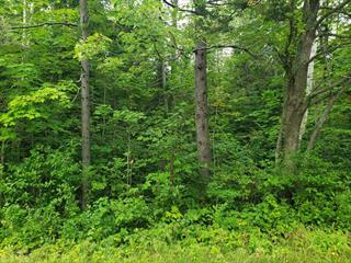 Terrain à vendre à Saint-Cyprien (Chaudière-Appalaches), Chaudière-Appalaches, Avenue du Parc, 16110278 - Centris.ca