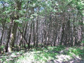 Terrain à vendre à Ogden, Estrie, Chemin  Descente 2, 17687319 - Centris.ca
