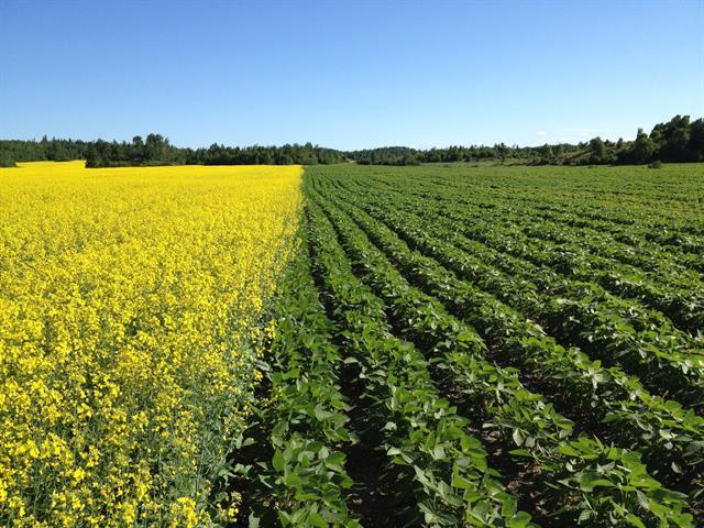 Land for sale in Saint-Henri-de-Taillon, Saguenay/Lac-Saint-Jean, 3e Rang Est, 11870212 - Centris.ca