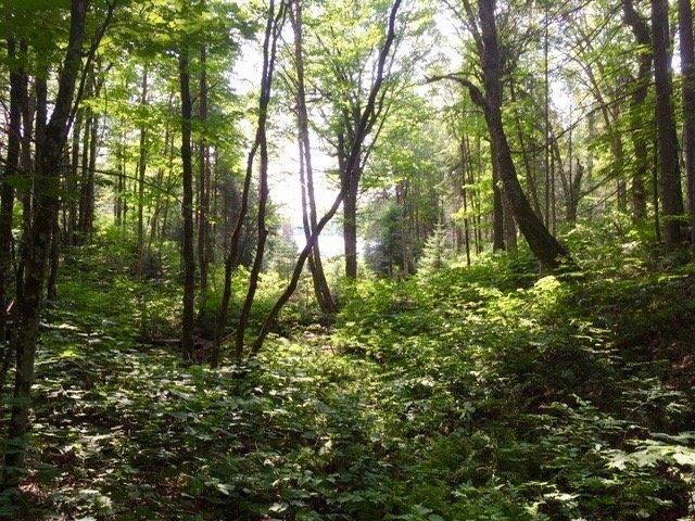 Terrain à vendre à Saint-Mathieu-du-Parc, Mauricie, 37A, Chemin du Lac-Jackson, 23895476 - Centris.ca