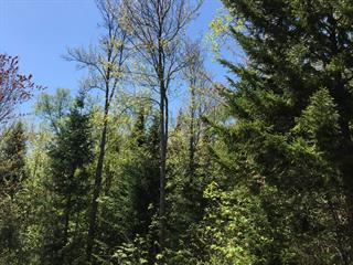 Lot for sale in Sainte-Adèle, Laurentides, Rue des Cimes, 13697983 - Centris.ca