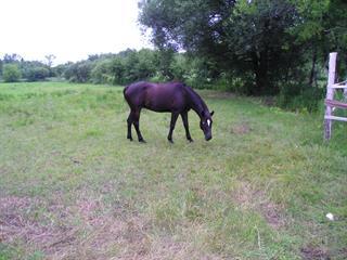 Land for sale in Vaudreuil-Dorion, Montérégie, 2920, Montée d'Alstonvale, 9216242 - Centris.ca