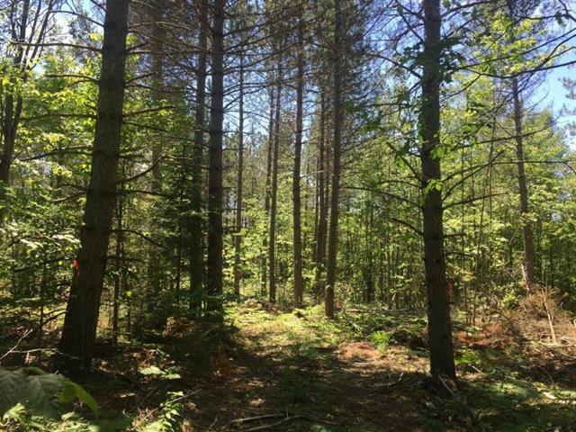 Land for sale in Bécancour, Centre-du-Québec, Chemin des Trembles, 9991616 - Centris.ca