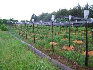 Hobby farm for sale in Fortierville, Centre-du-Québec, 3245Z, Rang  Saint-Sauveur, 24245986 - Centris.ca