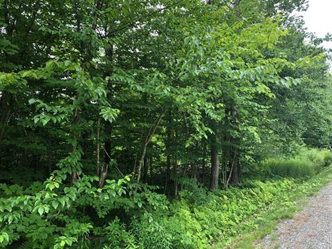 Lot for sale in Magog, Estrie, Chemin  Tétreault, 20716477 - Centris.ca