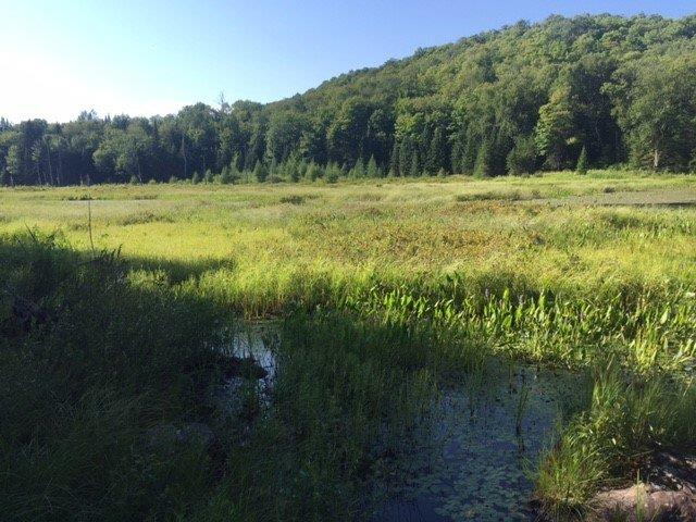Lot for sale in Wentworth-Nord, Laurentides, Chemin du Lac-Rond, 20981987 - Centris.ca