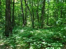 Lot for sale in Austin, Estrie, Rue des Pruniers, 28543998 - Centris.ca