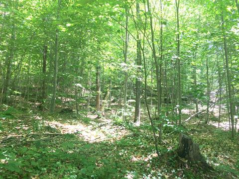Lot for sale in Wentworth-Nord, Laurentides, Rue  Gravel, 27129450 - Centris.ca