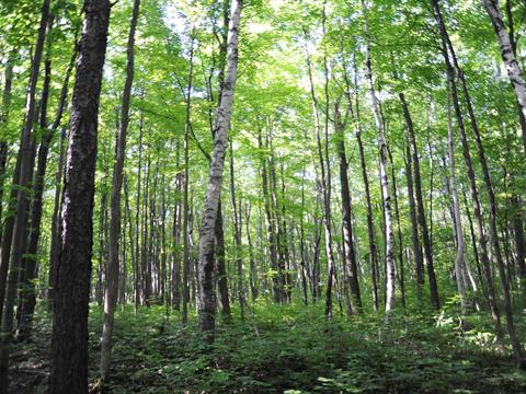 Lot for sale in Lac-Tremblant-Nord, Laurentides, Chemin des Martres, 25431058 - Centris.ca