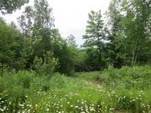 Terrain à vendre à Mandeville, Lanaudière, Ancien ch. du Lac-Sainte-Rose, 28708570 - Centris.ca