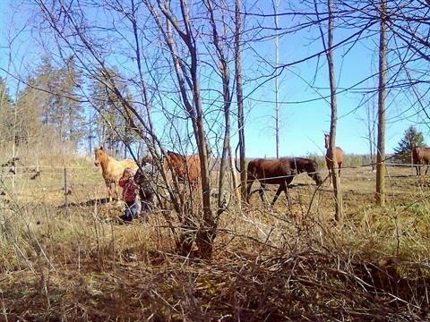 Hobby farm for sale in Saint-Isidore (Montérégie), Montérégie, 291A, Rang de la Grande-Ligne, 24746162 - Centris.ca