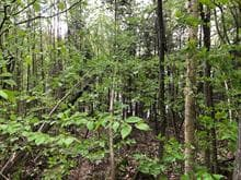 Lot for sale in Lac-aux-Sables, Mauricie, 290, Chemin  Bourbeau, 9233992 - Centris.ca