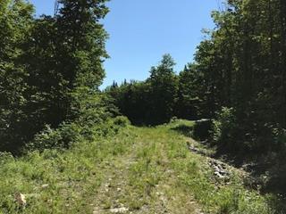 Lot for sale in Val-Racine, Estrie, Chemin de la Forêt-Enchantée, 14844081 - Centris.ca