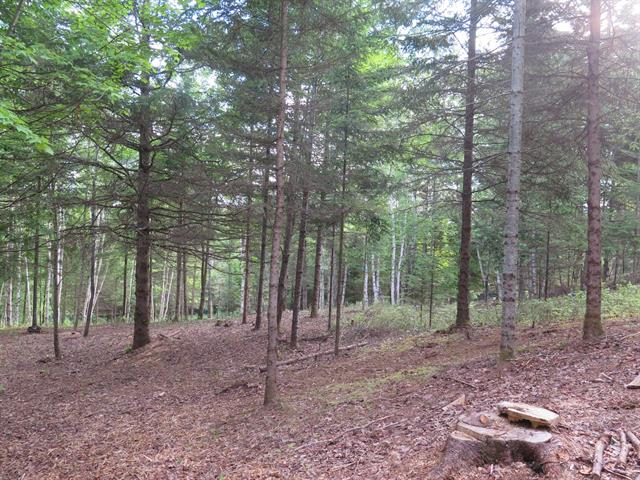 Lot for sale in Mont-Tremblant, Laurentides, Allée de la Sapinière, 22938536 - Centris.ca