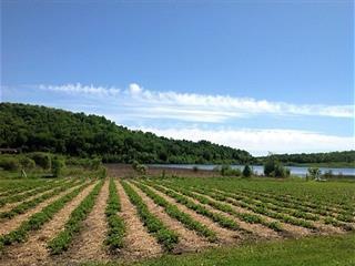 Land for sale in Mont-Laurier, Laurentides, 2926Z, Montée des Soucy, 18715761 - Centris.ca