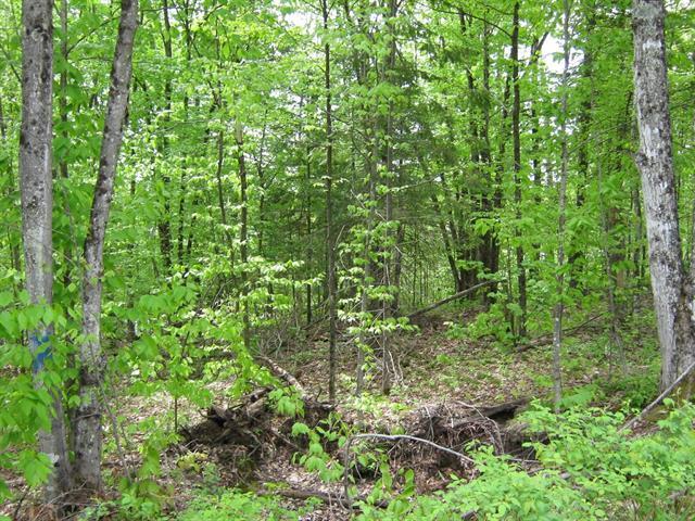 Terrain à vendre à Boileau, Outaouais, Chemin de la Liberté, 10648382 - Centris.ca