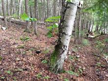 Lot for sale in Nominingue, Laurentides, Chemin  Zénon-Hébert, 22176713 - Centris.ca