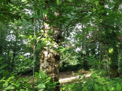 Terrain à vendre à Stoneham-et-Tewkesbury, Capitale-Nationale, 115, Chemin du Manoir, 12716752 - Centris.ca