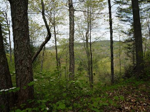 Lot for sale in Saint-Adolphe-d'Howard, Laurentides, Chemin du Petit-Pont, 22191552 - Centris.ca