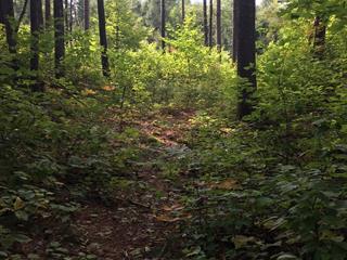 Terrain à vendre à Kazabazua, Outaouais, Chemin  Harshaw, 17448246 - Centris.ca