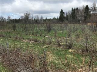 Land for sale in Sainte-Lucie-de-Beauregard, Chaudière-Appalaches, Route des Chutes, 10438099 - Centris.ca