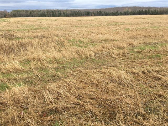 Land for sale in Saint-Isidore-de-Clifton, Estrie, Chemin des Perron, 13204225 - Centris.ca