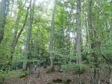 Lot for sale in Nominingue, Laurentides, Chemin du Tour-du-Lac, 12797342 - Centris.ca