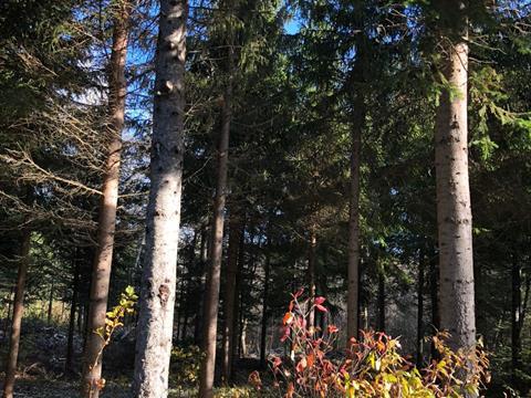 Terre à vendre à Sainte-Justine, Chaudière-Appalaches, Route  204, 23820879 - Centris