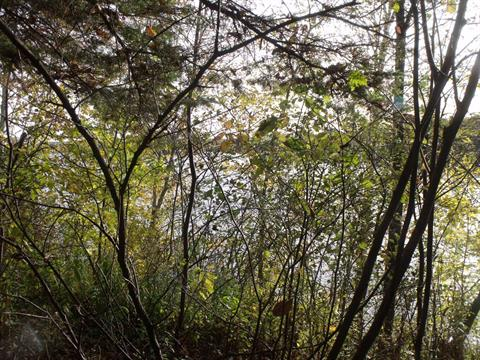 Terrain à vendre à Aumond, Outaouais, Chemin de la Traverse, 22251002 - Centris