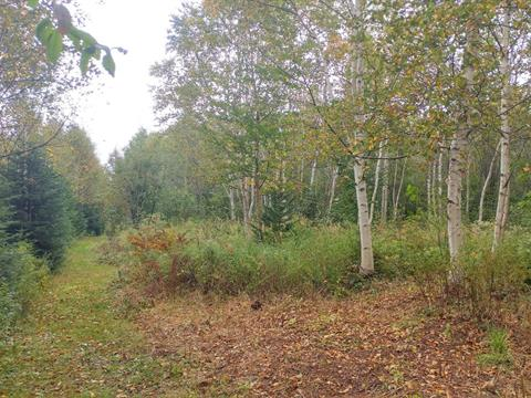 Lot for sale in Saint-Tite-des-Caps, Capitale-Nationale, Chemin des Bouleaux, 26696173 - Centris.ca