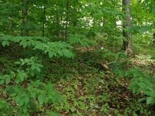 Terrain à vendre à Gatineau (Aylmer), Outaouais, Rue  Shortley, 17903728 - Centris.ca