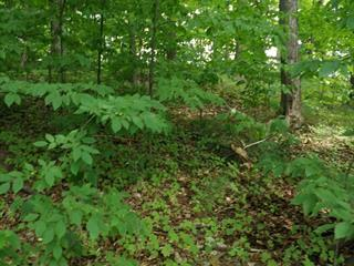 Lot for sale in Gatineau (Aylmer), Outaouais, Rue  Shortley, 17903728 - Centris.ca