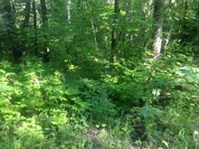 Terrain à vendre à Gracefield, Outaouais, Chemin du Bois-Franc, 15289477 - Centris.ca