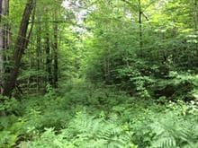 Terrain à vendre à Bolton-Est, Estrie, Montée de Baker-Pond, 15362599 - Centris.ca