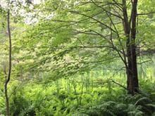 Terrain à vendre à Bolton-Est, Estrie, Montée de Baker-Pond, 20822661 - Centris.ca
