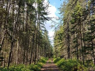 Terrain à vendre à Saint-Henri-de-Taillon, Saguenay/Lac-Saint-Jean, 24, Route du 6e Rang, 24792546 - Centris.ca